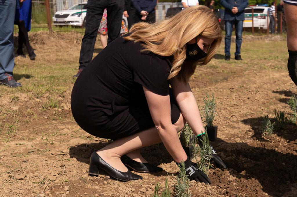 Pani prezidentka sadí levanduľu